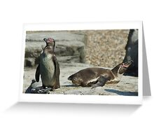 The 2 positions of the Penguin Greeting Card