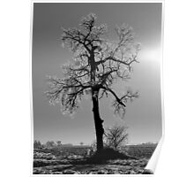 Icy South Dakota Government Tree Poster