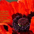 A Poppy for forgiveness by Carolyn Clark