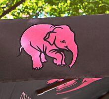 Pink elephant by Thad Zajdowicz