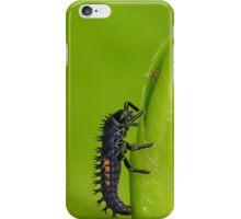 Ladybird larva iPhone Case/Skin