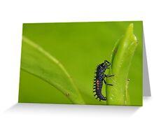 Ladybird larva Greeting Card