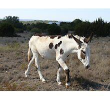 Painted Donkey Photographic Print