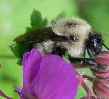 Up Close And Personal With A Bee by Martha Medford