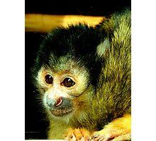 Staring Squirrel Monkey Photographic Print