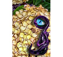 A Purple Wormy Dude Photographic Print