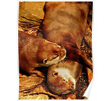 Snuggling Otters Poster