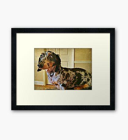 Pensive Pooch Framed Print