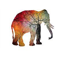 Elephant Tree Soul Photographic Print