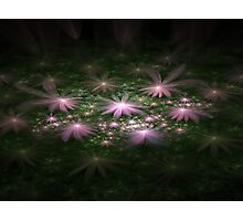 Flowers In The Night Photographic Print