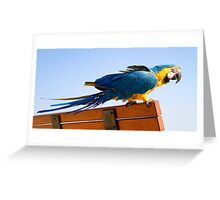 Macaw Extended Greeting Card