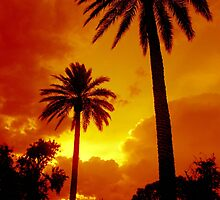 SUNSET PHOENIX by Thomas Barker-Detwiler