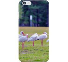 Ibises On The Ball Field iPhone Case/Skin
