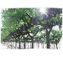 Napa Vineyards Poster