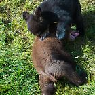 Young Bear Cubs by Luann wilslef