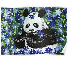 Panda Bear in Blue Poster