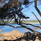 BUNKER BAY by Margaret Stevens