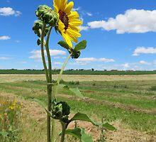 Wall Flower Sun Flower by Diane Arndt