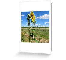 Wall Flower Sun Flower Greeting Card