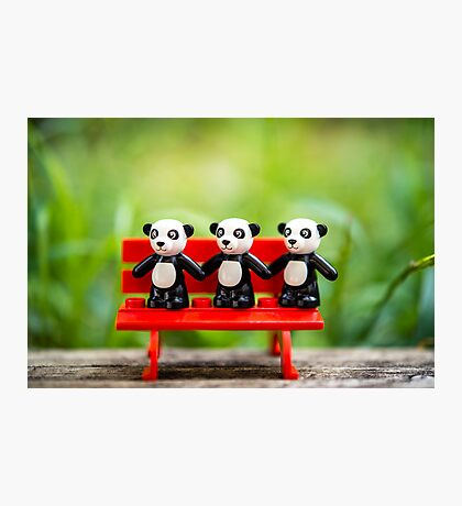 Three Pandas Photographic Print