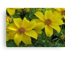 Yellow Flower Pair Canvas Print