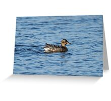 Green-Winged Teal Duck Greeting Card