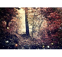 Forest of My Dreams Photographic Print
