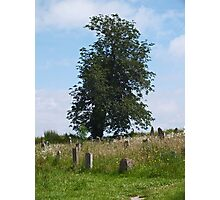 Wild Churchyard Project Photographic Print