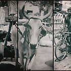 engines of india by handheld-films