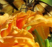 Tiger Swallowtail On Orange Day Lilly Sticker
