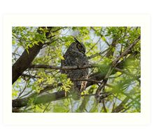 Great Horned Owl in the Trees Art Print