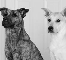 Roxy & Rocco by Lisawv