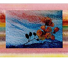 Pressed Flowers on Blue Photographic Print