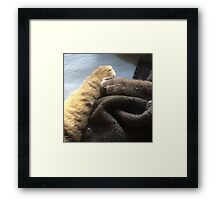 Furry Friendship  Framed Print