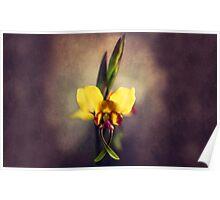 Fine Art Donkey Orchid - Landscape Orientation Poster