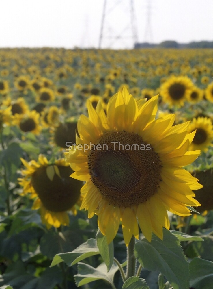One In A Million by Stephen Thomas