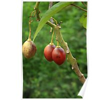 Tree Tomatoes Poster