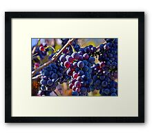 Saw it on the Grape Vine Framed Print