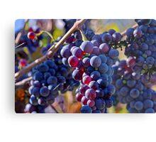 Saw it on the Grape Vine Metal Print