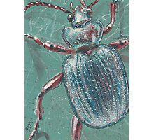Shiny Beetle Photographic Print