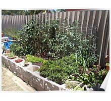 Backyard raised garden Poster