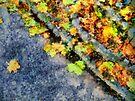 Autumn Jigsaw by RC deWinter