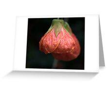 Chinese Lantern Greeting Card