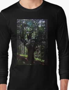 A Lone Deciduous Tree in a Pine Forest Long Sleeve T-Shirt