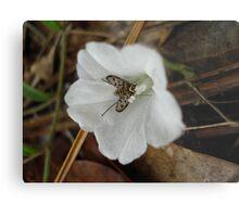 Beefly in Creeping Wildflower Metal Print