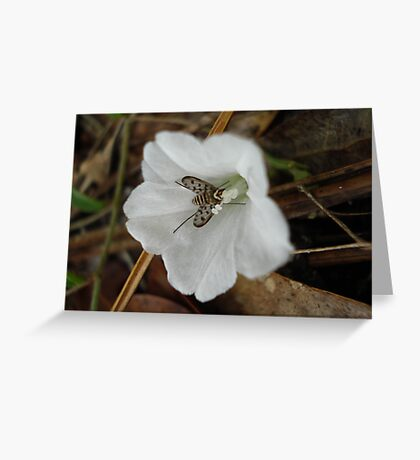 Beefly in Creeping Wildflower Greeting Card