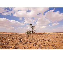 Desert Oasis. Photographed in Israel Photographic Print