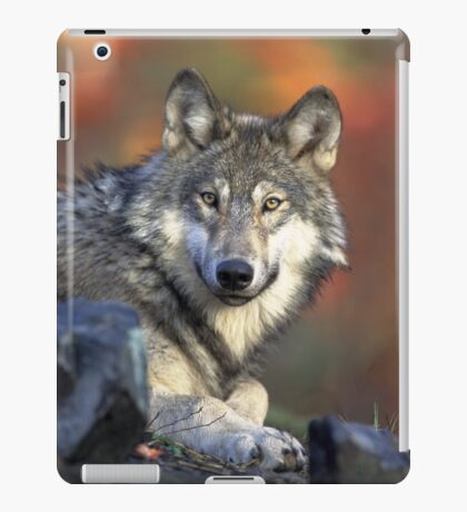WOLF IN THE WILD iPad Case/Skin