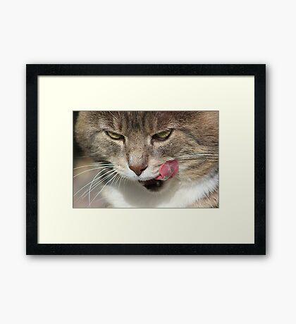 Cat licking lips Framed Print