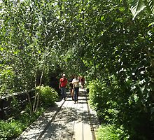 Thicket, High Line, New York City's Elevated Garden and Park  by lenspiro